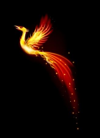night bird: Phoenix bird  Illustration
