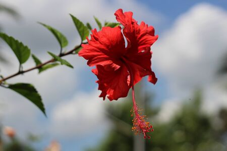 shurb: Red chaba