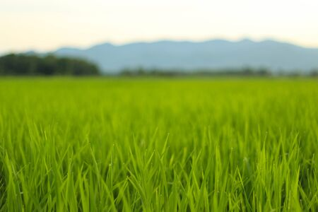 rice fields, mountains, sky soft and blur Stock fotó - 66203301