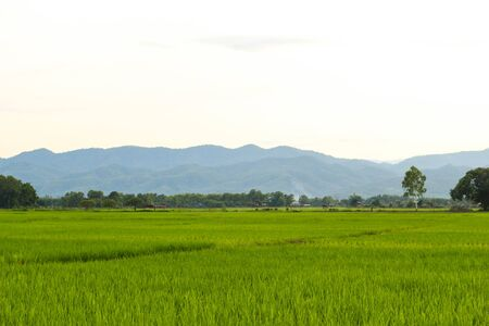 rice fields, mountains, sky soft and blur Stock fotó