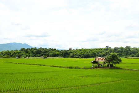 rice fields, mountains, sky soft and blur Stock fotó - 66269360