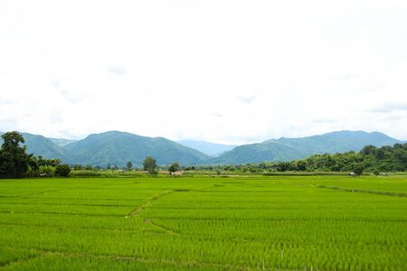 rice fields, mountains, sky soft and blur Stock fotó - 66269362