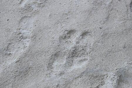 Sand Texture, Background