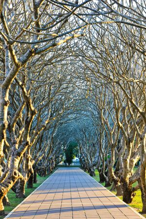 end of the trail: Tunnel of trees in the park