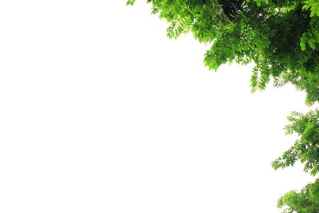 Green leaves isolated background photo