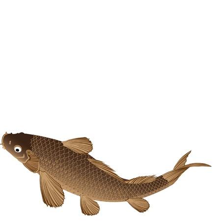 pez carpa: Carpa grasa con grandes escalas brillantes y fuerte Vectores