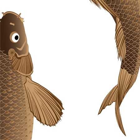 beautiful fat carp with fins and tail Stock Vector - 9420790