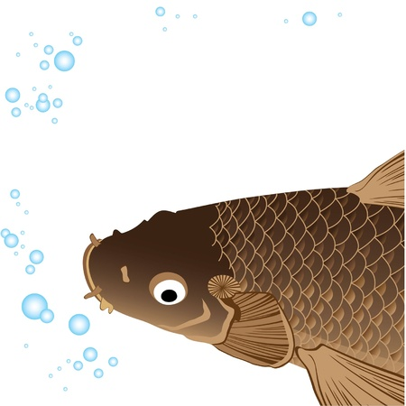 beautiful fat carp with fins and tail and bubbles Stock Vector - 9420779