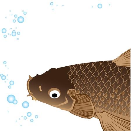 carp fishing: bella carpa grasso con pinne e la coda e bolle