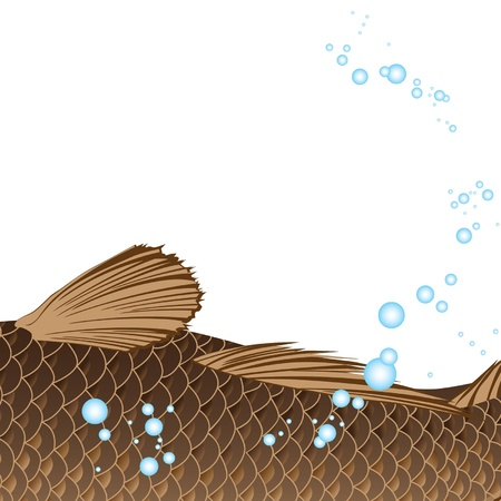 beautiful fat carp with fins and tail Illustration