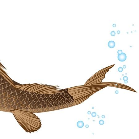 carp fishing: bella carpa grasso con pinne e la coda