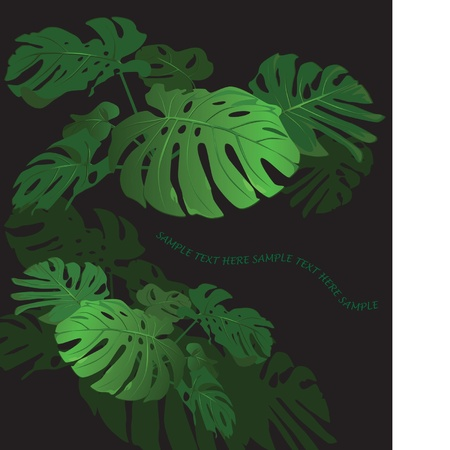 Huge leaves of a tropical flower monstera Stock Vector - 9426665