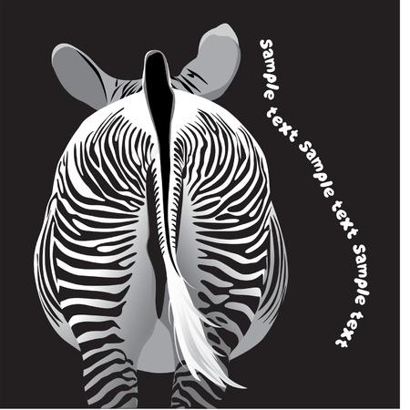 beautiful zebra striped rear view Illustration