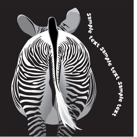 herbivore: beautiful zebra striped rear view Illustration