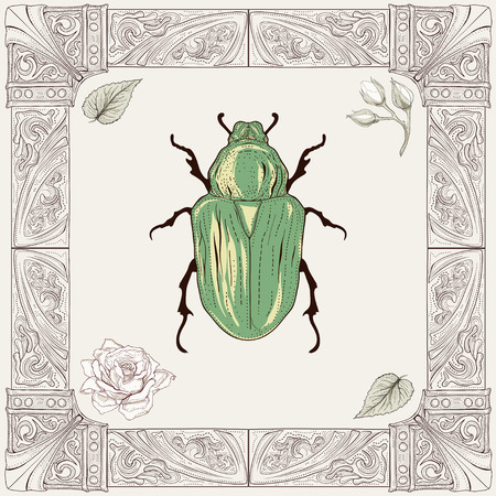 hand drawing rose chafer buds and leaves with decorative frame vintage engraving style