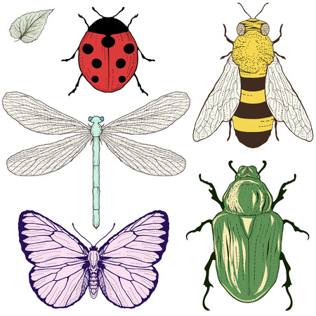 hand drawing insects set vintage engraving style Vector