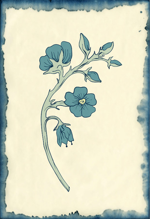 withered: hand drawn flowers on ink stained paper vintage engraving style