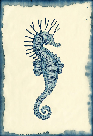 hand drawn seahorse on ink stained paper vintage engraving style