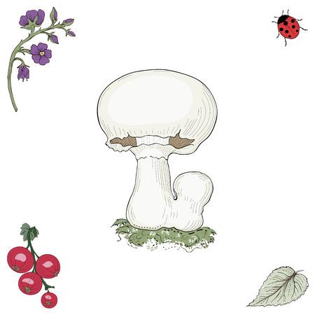 champignon: Hand drawn champignon mushroom. Vintage engraving style. Colorful illustration