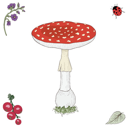 Hand drawn fly agaric mushroom. Vintage engraving style. Colorful illustration Vector