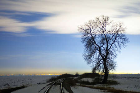 Single tree by the railway at night photo
