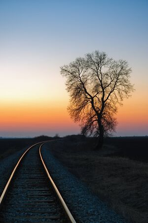 Alone tree by the railway at sunset photo