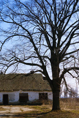 Abandoned destroyed farm house and tree photo