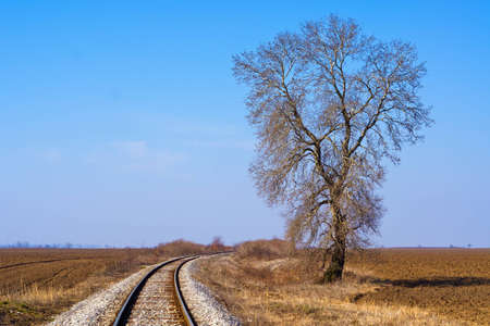 Single tree by the railway photo