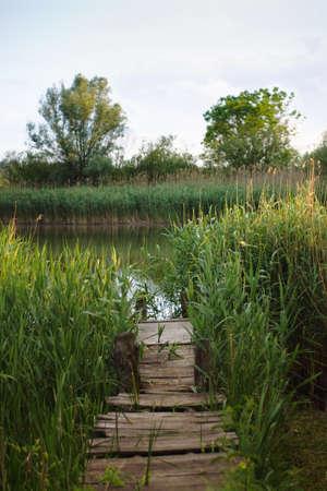 wooden dock: Old abandoned overgrown wooden dock