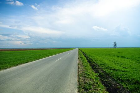 single lane road: Long straight road by the young wheat field Stock Photo