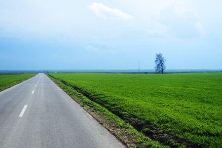 Long empty road with single bare tree photo