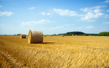 Hay bales in the field at summer