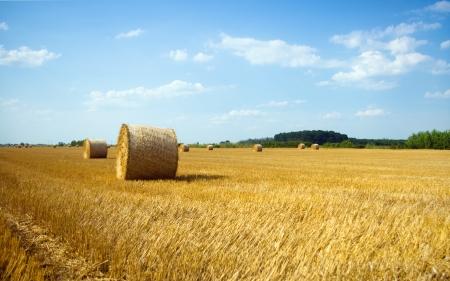 Hooibalen in het veld in de zomer