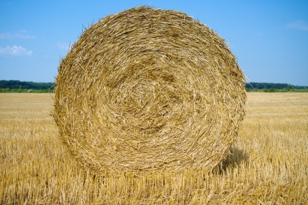 Close up of hay bale textures photo