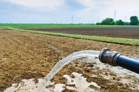 hose: El agua que fluye de la manguera en el campo agr�cola durante el riego