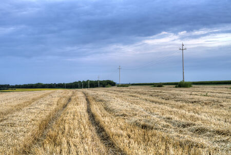 telephone poles: Mowed wheat field at evening with telephone poles in the background   Stock Photo