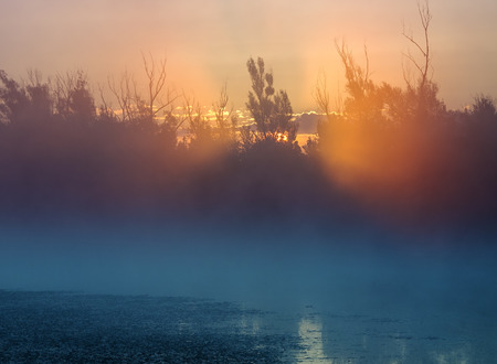 Sunrise through trees on foggy lake photo