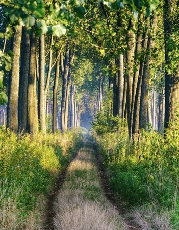 Straight path through forest. photo