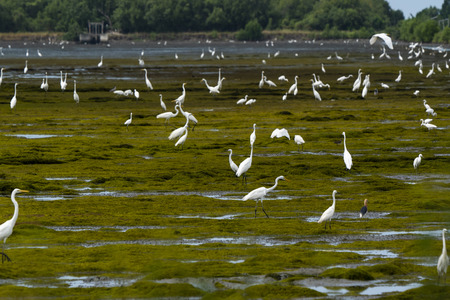 a group of Egrets at outdoor