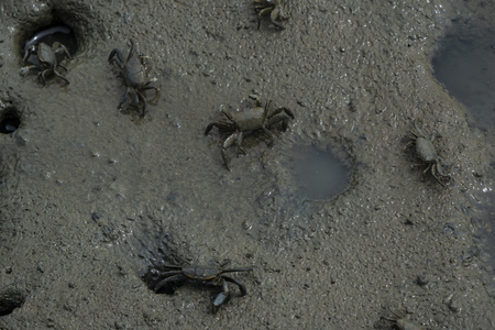 Small crabs in seaside