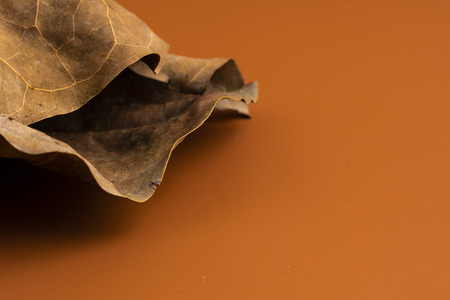 Dry leaf on brown background