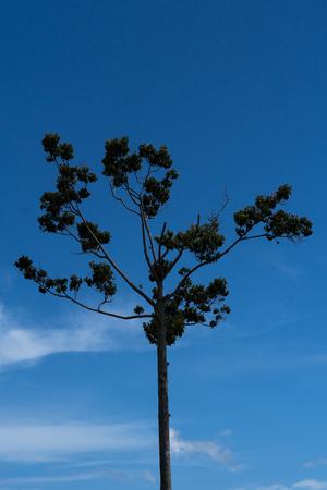 Tree with sky view Stock Photo