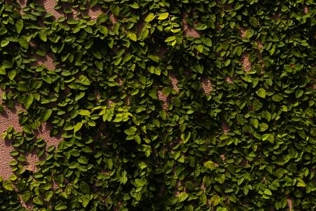 Tree on the wall Stock Photo