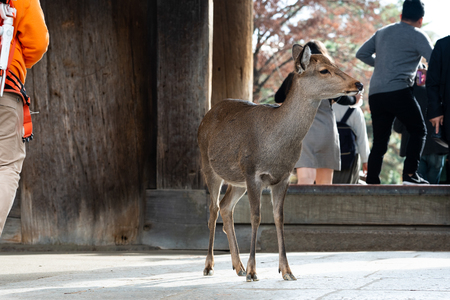 Deer in the park Stock Photo
