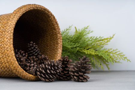 Pine cone as a background