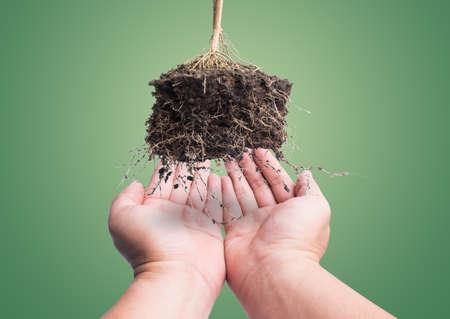 raíz de planta: mano y la raíz de la planta con el suelo en el fondo verde, el concepto de la tierra segura