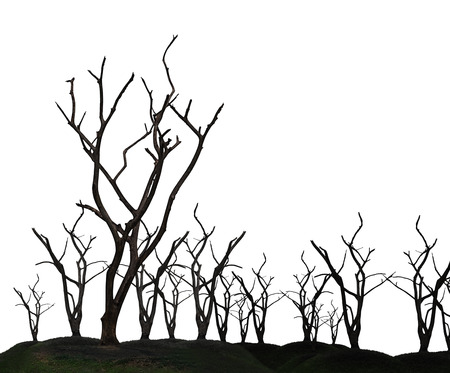 Global warming concept. Dark and burned of dead tree isolated on white background. Wildfires concept. Silhouette of dead tree.