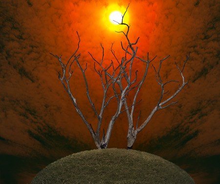 died: Global warming concept. Dark and burned of dead tree on twilight sky with sunset background . Wildfires concept. Silhouette of dead tree.