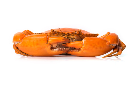 maryland: Steamed crab on white background.