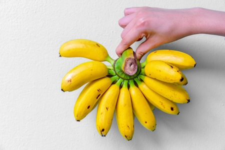 Hand Holding a Bundle of Ripe Bananas on White Background Stock Photo